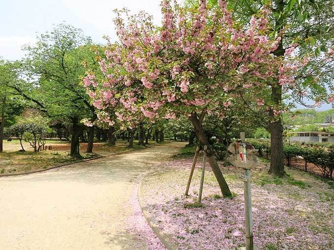 西武庫公園・花