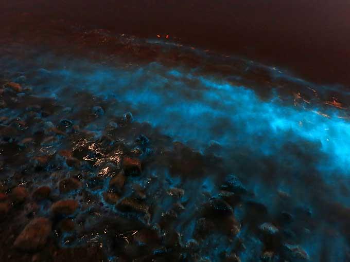 ファンシーな光る海