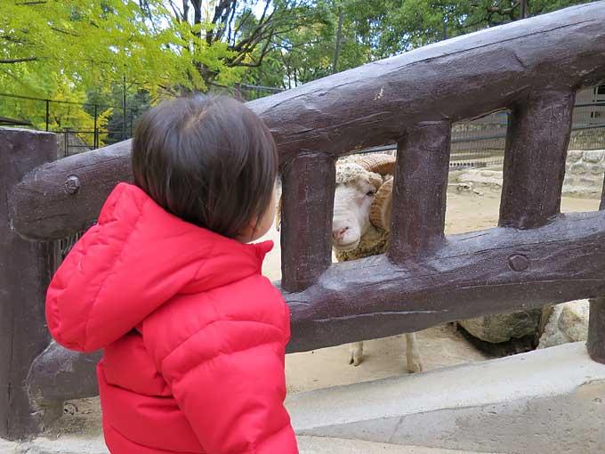 羊と語り合う