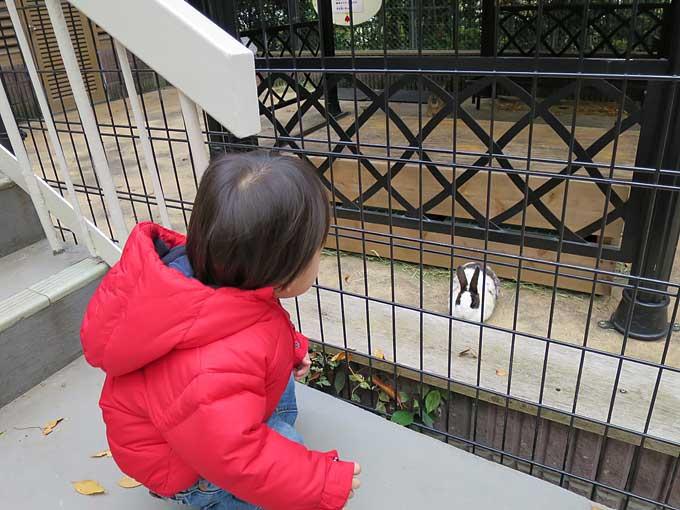 ウサギと語り合う