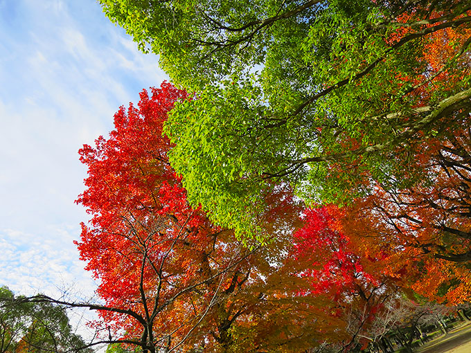 西武庫公園の紅葉
