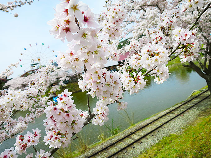 湖と満開の桜
