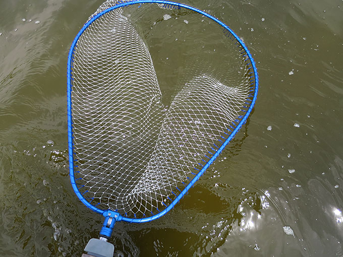 釣りで使ったタモ