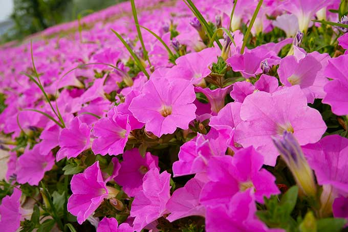 お花が綺麗!!