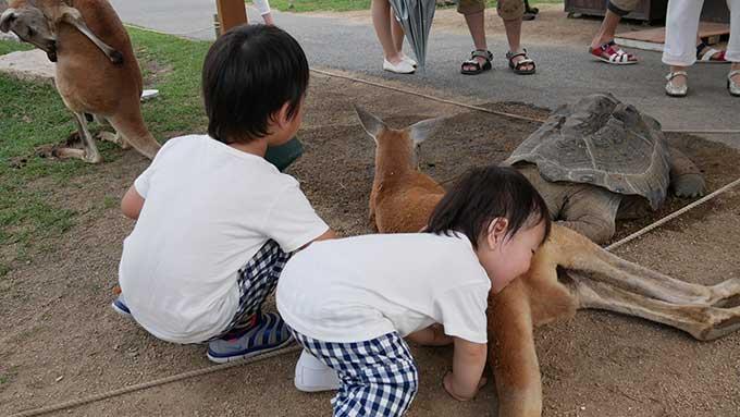 次男君はカンガルーに顔を埋める!!