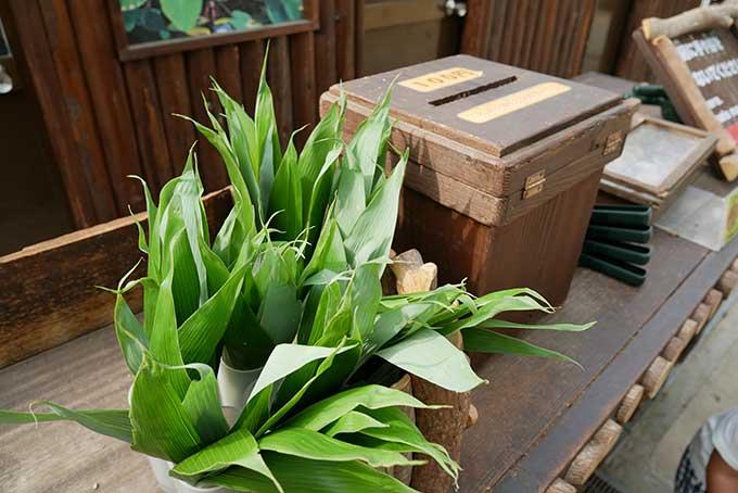 カピバラたちに好物の笹の葉