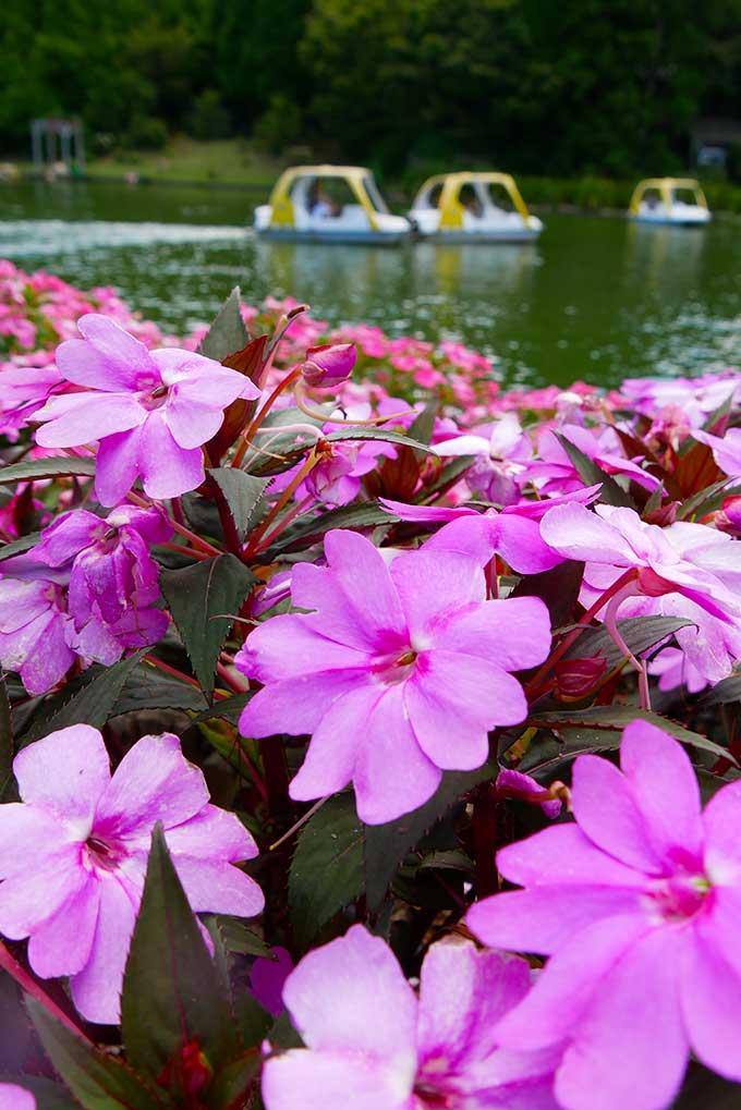 花と湖は絵になります