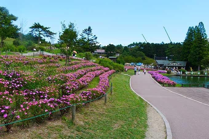 花が綺麗!!
