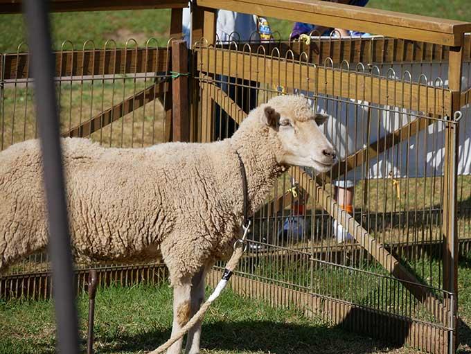 羊に話しかけたり