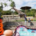 【前編】関西・子供が遊べる『みさき公園』動物園&遊園地レビュー!