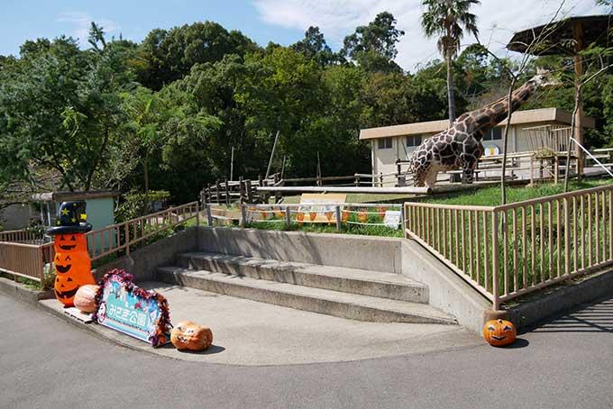 動物園の撮影スポット