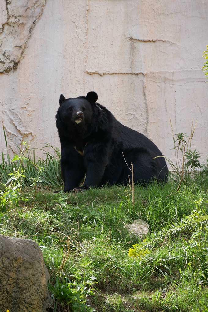 熊を見ると結構怖いです