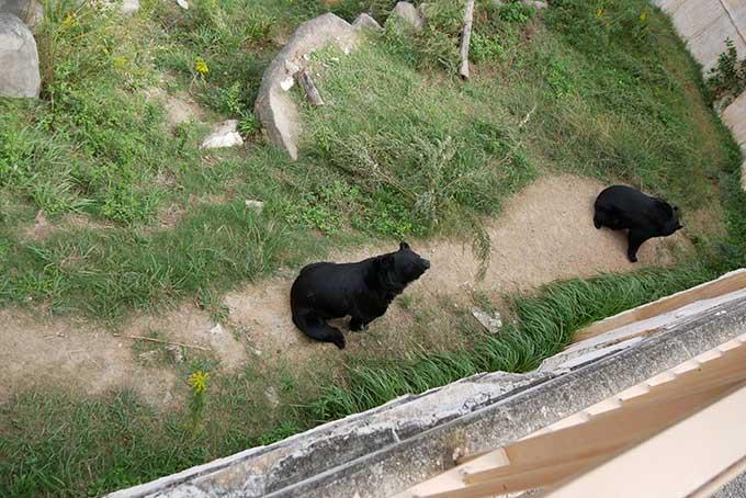 上からクマのブースを見学