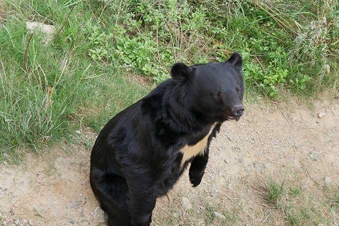 熊が立つと怖いです!!