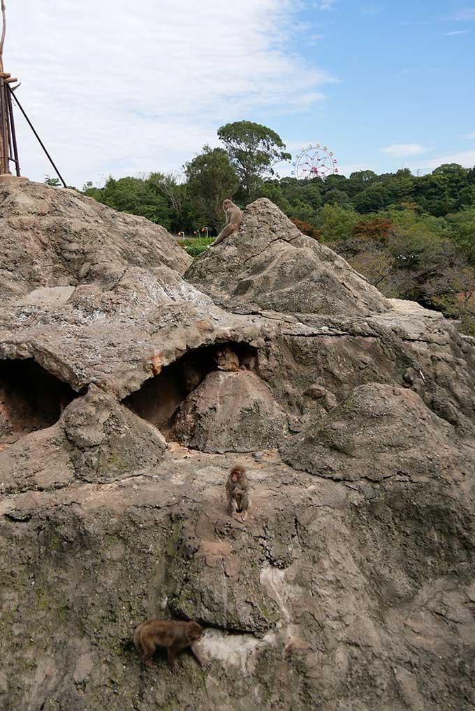 猿山の裏側