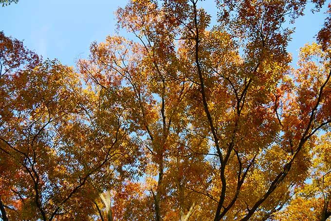 木々が色づき始めてます