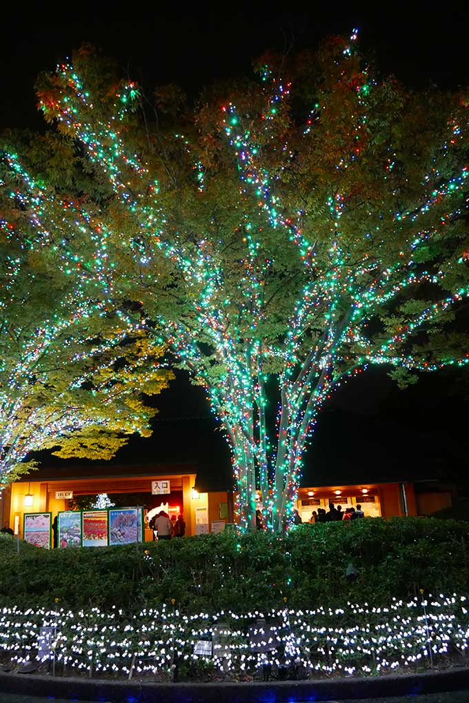 ライトアップされた木