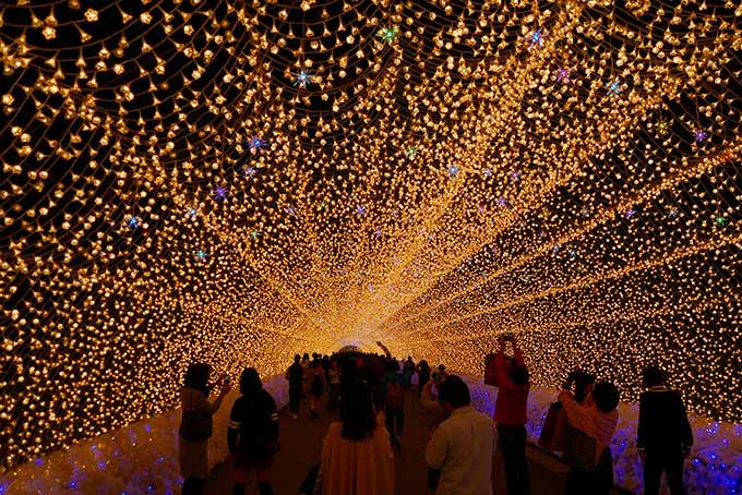 何度来ても綺麗な光のトンネル