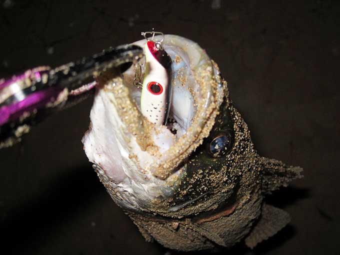 シーバスを釣った時の達成感