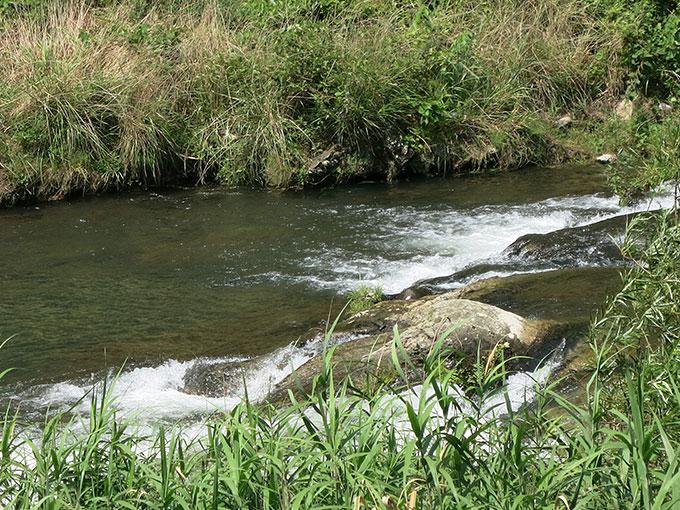 夏シーバス・河川上流域