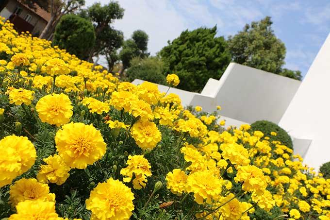 お花が綺麗