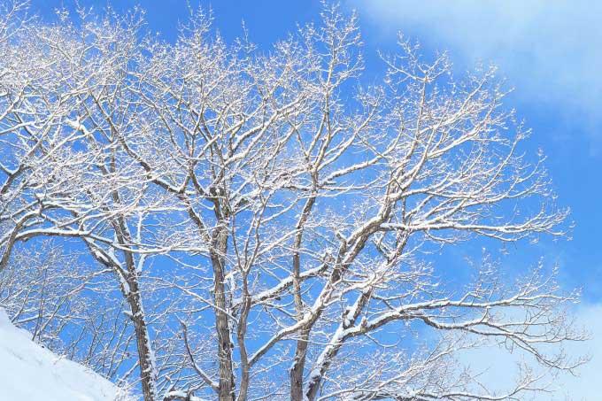 冬パターン