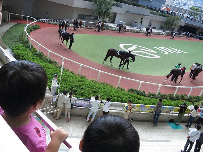 阪神競馬場のパドック観戦