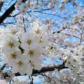シーバスの季節別レンジ深度表!!