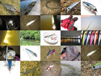 シーバス釣りの基本とコツを総まとめ!