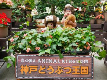 夏でも楽しめる「神戸どうぶつ王国」へ行ってきました!!
