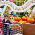 【ながしまスパーランド】幼児でも楽しめる乗り物&アトラクション!