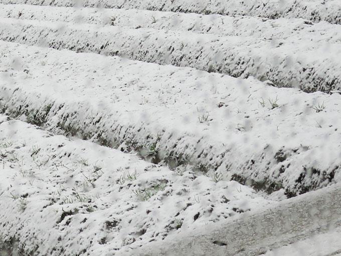 シーバス釣りの冬パターン