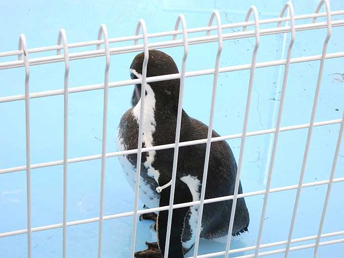 アクセス減少はペンギンの影響?パンギンで確認!